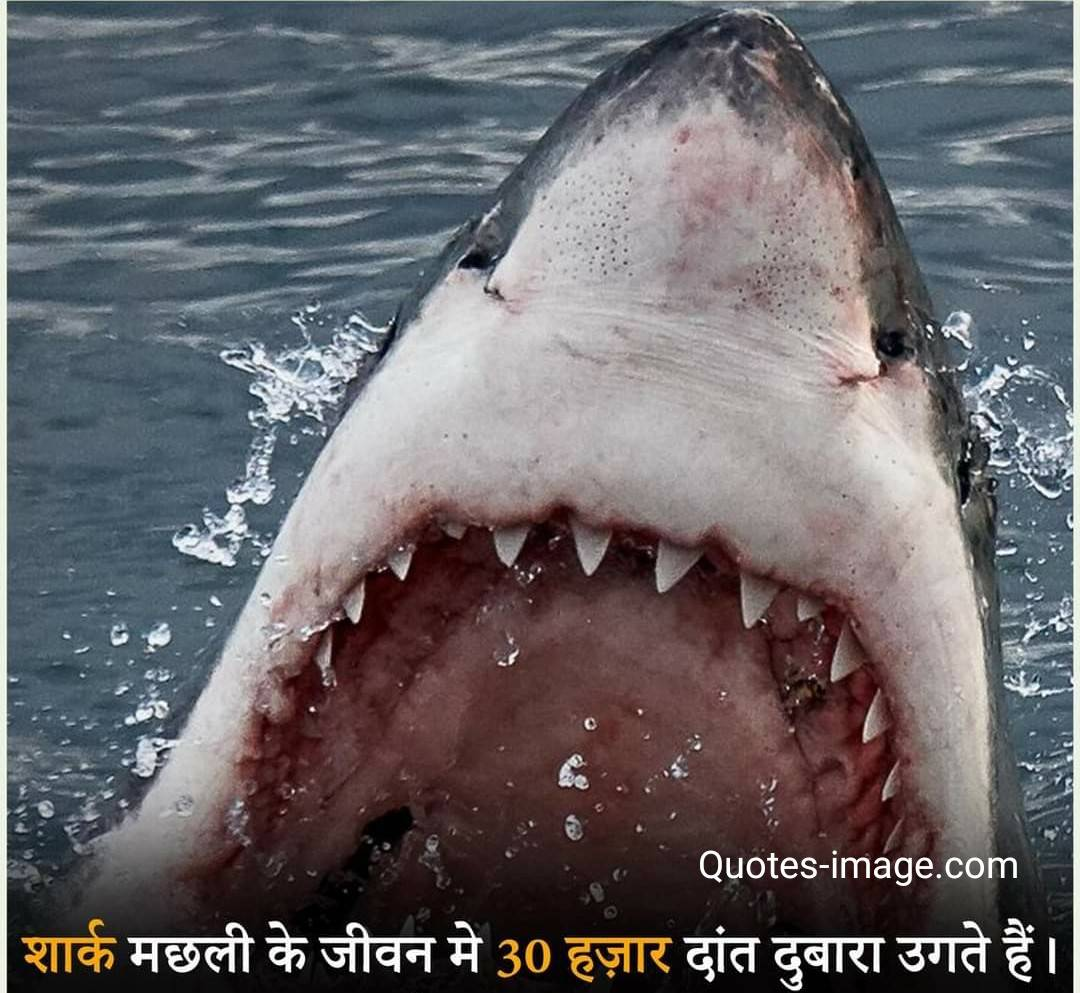Facts About Shark | Facts About World