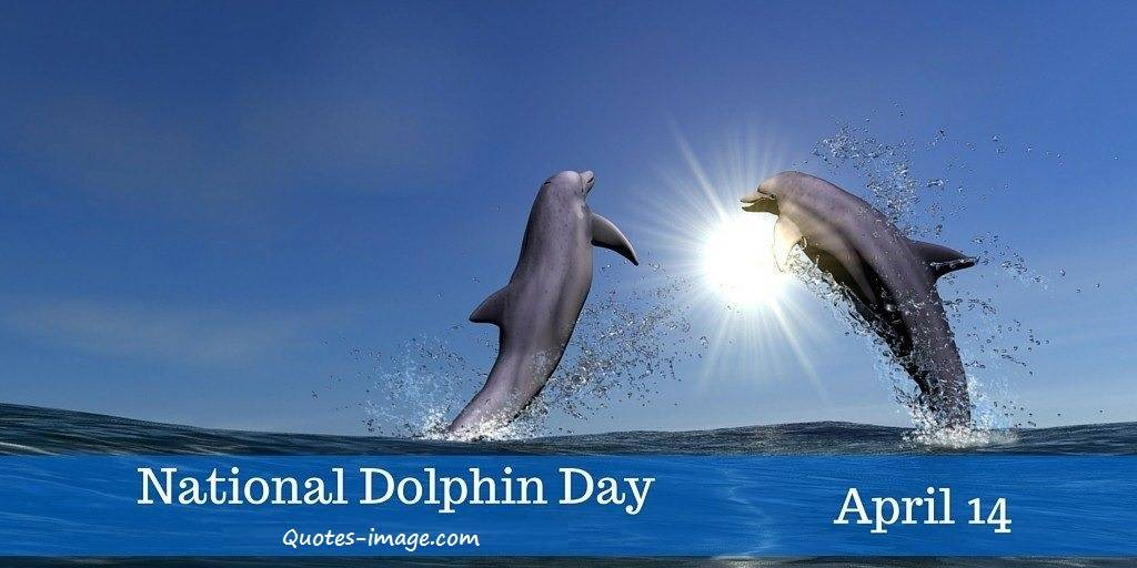 National Dolphin Day 14th April | Special Day 14th April