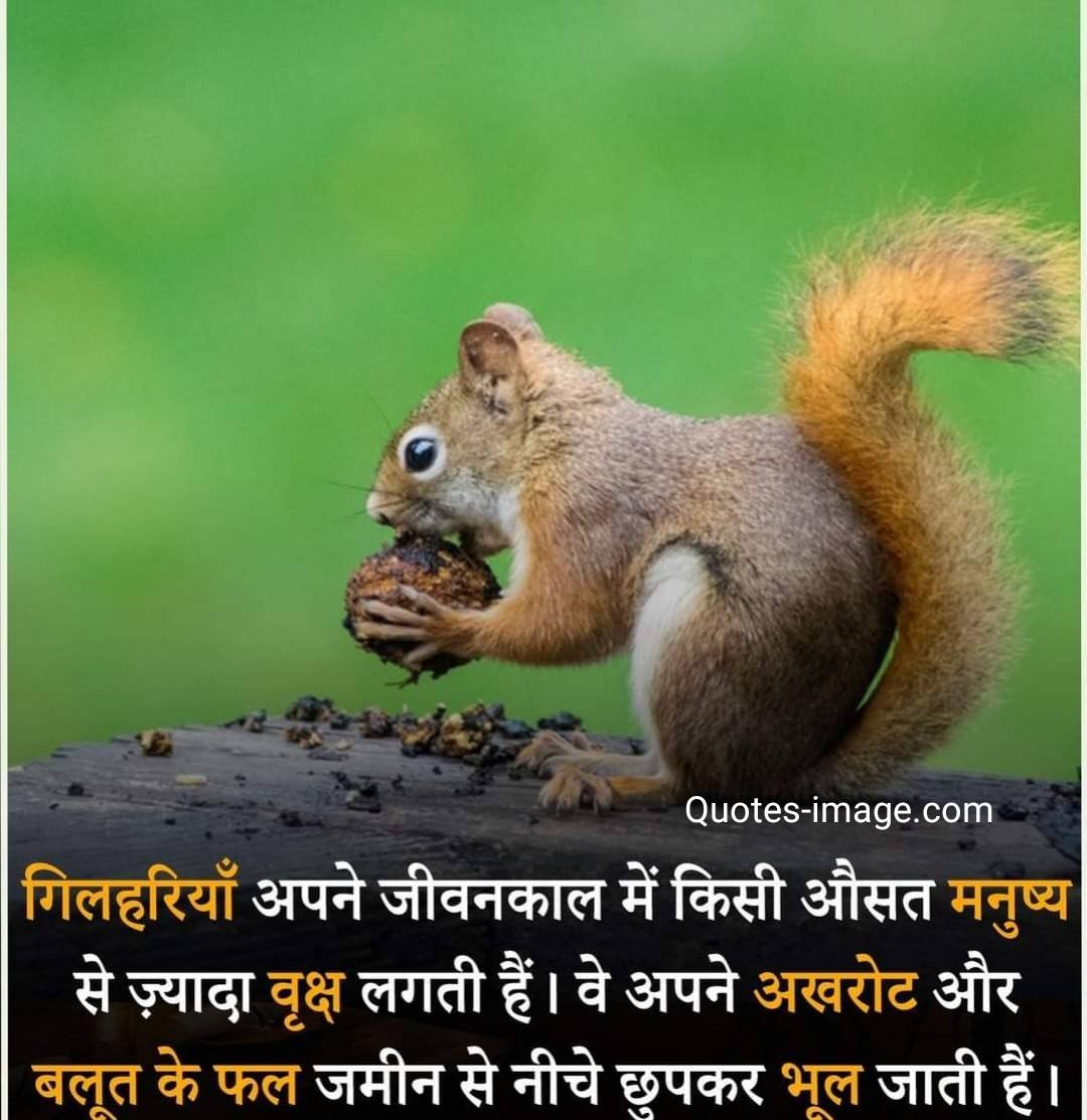 Facts About World | Facts About Animal | Facts About Squirrels