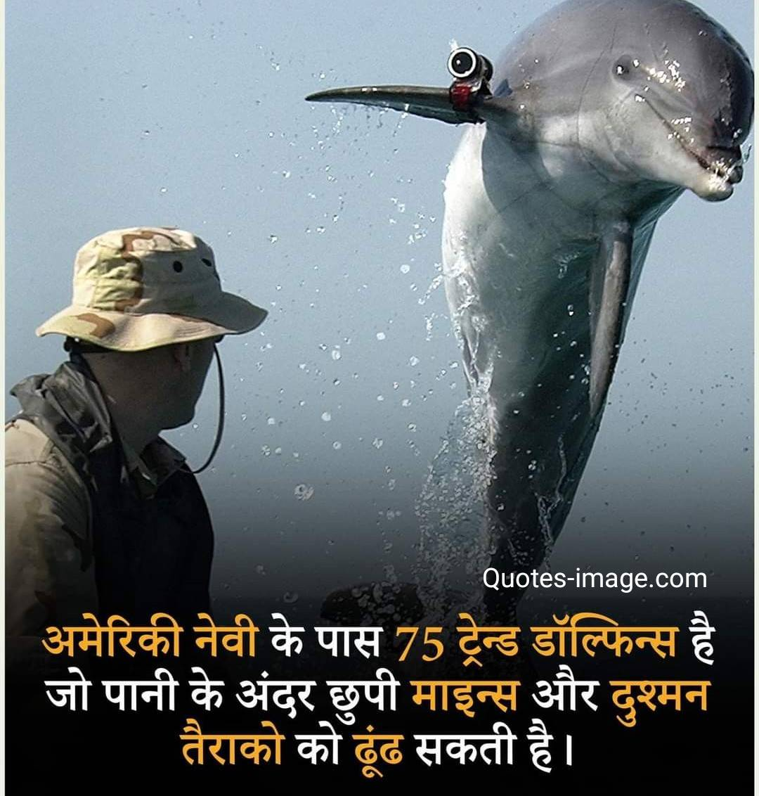 Facts About U S Navy | Facts About Dolphins | Facts About U S